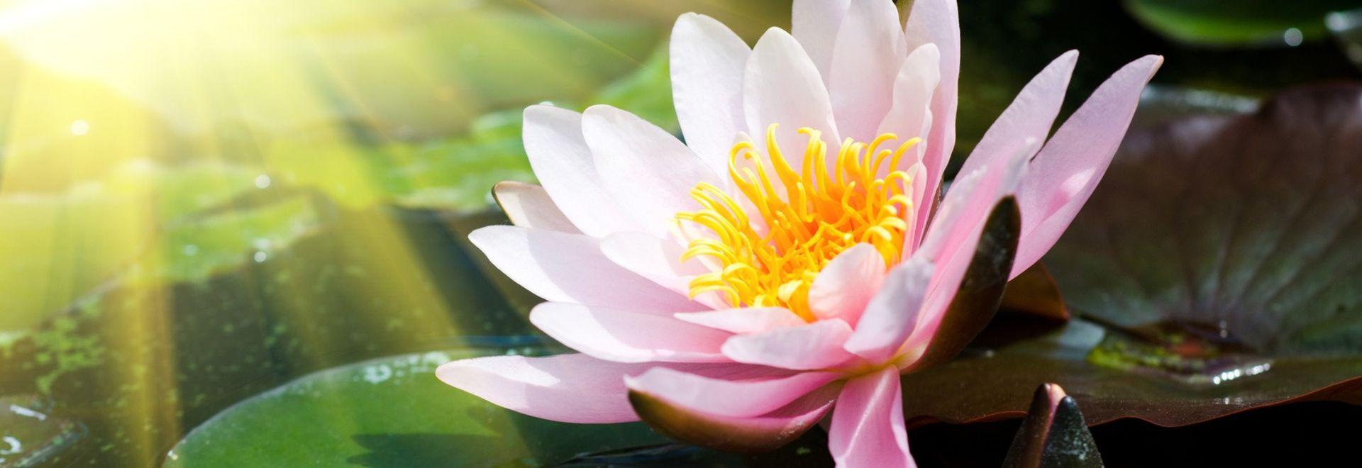 Ayurveda ist das Wissen vom Leben.