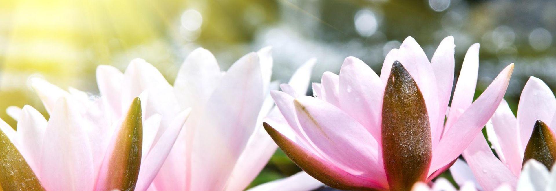 Elemente aus der Atemtherapie des Qigong