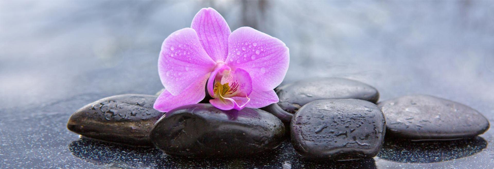 Orchideen-als-Sinnbild-für-Schönes