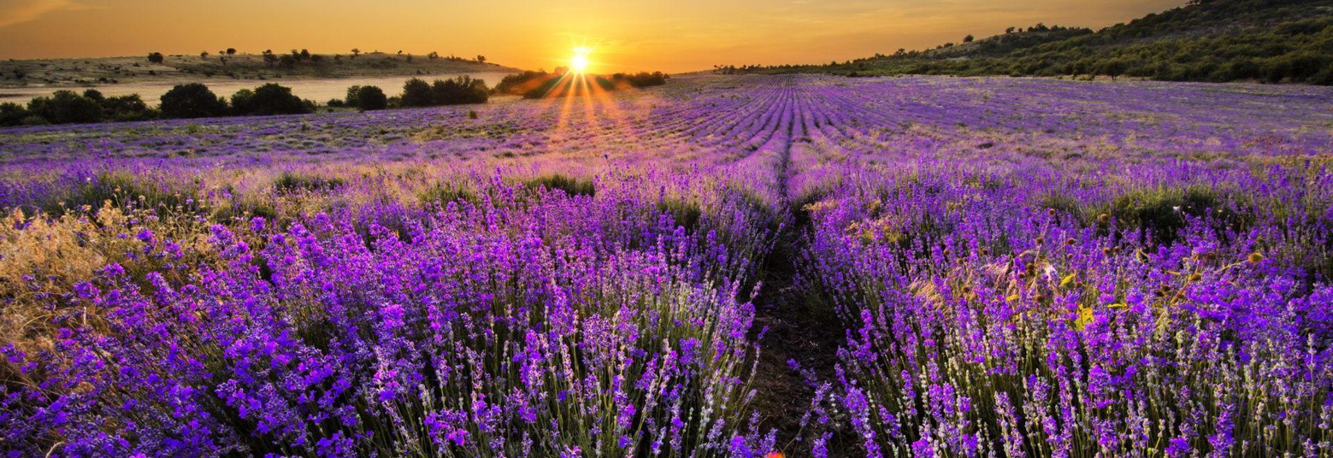 Pflanzenheilkunde als Ursprung der Aromatherapie