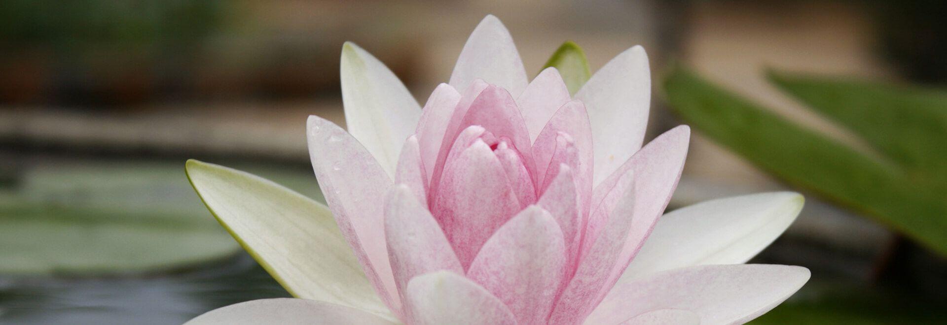 Tipps für die erfolgreiche Praxis der Thai-Massage entdecken